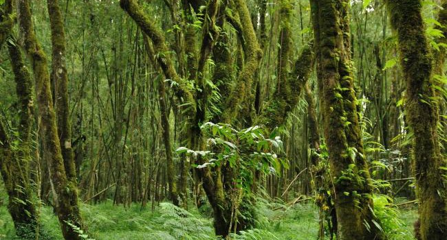 Ethiopia boosts forest bio-sphere reserves to fight climate change